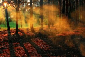 осень дым